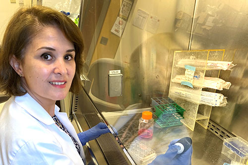 Nagham Younis, Orwig Laboratory- at the bench